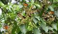 Guatemala_Norden_Tikal_Schmetterlinge