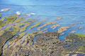 Argentinien_Punta Ninfas_Viele Vögel
