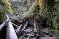USA_Kalifornien_Prairie Creek Nationalpark_Fern Canyon2