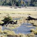 Kanada_British Columbia_Stewart_Baum auf Holz