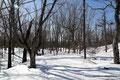 Kanada_Nova Scotia_Cape Split_15 km nur auf und ab, der Schnee bis zu 50 cm hoch
