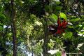Costa Rica_Santa Elena NP_Nebelwald17