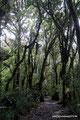 Costa Rica_Braulio Carrillo NP_Feuchte Angelegenheit