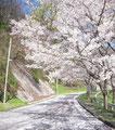 浜田市弥栄町熊の山公園