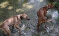 Abkühlung im Fluss! Bomani und Zina