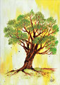 Der Ölbaum: Wir sind eingepfropft in die 12 Stämme Israels – in Abraham, Isaak und Jakob gegründet.