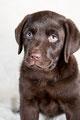Huisdieren fotografie Dierenportret Wilt u een aantal mooie foto's van uw huisdier? Dat kan! Het maakt niet uit of u nou een kat, hond, cavia, konijn of papegaai heeft. Zelfs slangen of andere bijzondere huisdieren zijn welkom!  De fotoshoot In onze fotos
