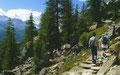 Durch lichte Nadelwälder führt der Wanderweg, fast immer mit Blick auf den Silser See