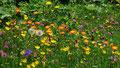 Blumenvielfalt am Wegrand