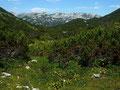 Das gewellte Hochplateau auf dem Rücken des Trisselbergs mit Blick auf die östl. Gipfel des Toten Gebirges