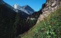 Das Rinderhorn vom Gemmiweg unterhalb des Sunnbühls bei einer anderen Wanderung mit allen drei Kindern zum Daubensee
