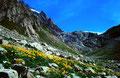 Die Kander entspringt dem Gletscherabbruch des Kanderfirns. Vorne großflächige Areale blühender Gämswurz im Blockwerk.