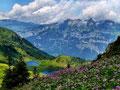 Blick über einen Hang mit Alpendost zum Seebensee und zu den Churfirsten