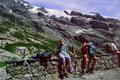 Blick zum Gletscher unter den Wetterhörnern von der Terrasse der Glecksteinhütte