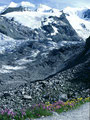 Am Weg von der Bovalhütte talswärts - Jede Menge Blumenpolster am Wegrand