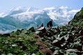 Auf der Seitenmoräne entlang zur Bovalhütte. Vorn Zwerweidenröschen.