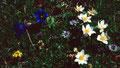 Bergblumen am Wegrand ins Altensteiner Tal