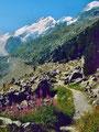 1981:Weidenröschen neben dem Weg zur Bovalhütte, hinten Piz Bernina