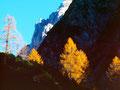 Lärchen im Sonnenseitenlicht am Aufstiegsweg von Arzkasten zur Wankspitzebei Lehnbergalp