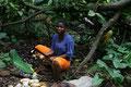 Kakaoanbau wird hauptsächlich von Kleinbauern betrieben (Togo, 2013)