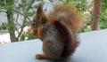 L'écureuil sur le rebord de fenêtre de la chambre