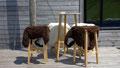 Peau de moutons au Buron du Col de la Croix-Morand