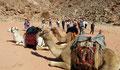 Dans le Wadi Rum
