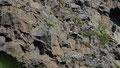 Falaise de la gorge d'Asbyrgi