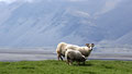 Sur la côte sud d'Islande