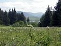 Le lac vu en descendant du chalet de la Maison des Fleurs d'Auvergne