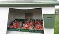Islande, près des sources chaudes. On prend son sac de tomates et on paye dans la boîte soit 1,62 euros