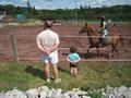 Les chevaux en manège