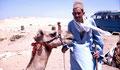 Guiseh, Egypte (2000)