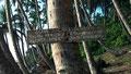 """"""" Zone sacrée et amende traditionnelle """" à Sassandra, Côte-d'Ivoire"""