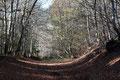 Sous bois près du Col des Goules
