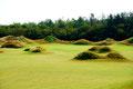 Der traumhafte Golfplatz auf Föhr