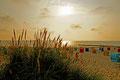 Stranhafer bei untergehender Sonne