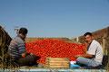 Tomatenverkauf in Ashgarbat