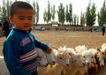 Auf dem Viehbasar in Kashgar