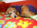 Nelli liebt es warm und kuschelig.
