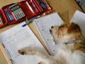 Auch die beste Hausaufgaben-Hilfe braucht mal eine Pause...