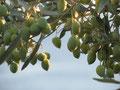 Unsere Spezialität: hauseigenes Olivenöl