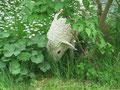 Betonfigur-Gartenfigur-Lamm stehend, ca. 52cm hoch
