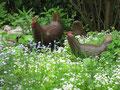 Betonfiguren-Gartenfiguren-Hühner