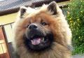 ... der süße Bär :-)