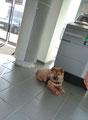 Besuch in der Bank - Ronja war vorbildlich brav!