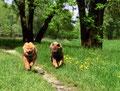 Ronja und Ylvi laufen um die Wette