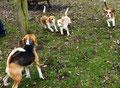 Lenny, Flo, Solay und Ibo auf dem Hundeplatz