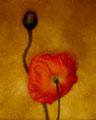 Gallery-Ⅵ Flower
