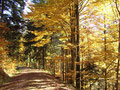 Herbst im Südschwarzwald